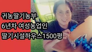 전라북도 김제 딸기스마트팜 귀농 6년차농부 양액밸브교체…