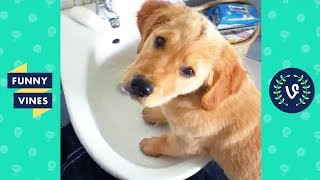 TRY NOT TO LAUGH - Cute FUNNY ANIMALS | Funny Videos February 2019