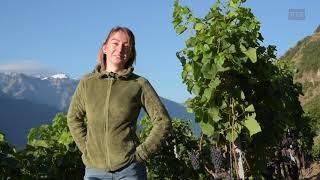 Line Dorsaz, viticultrice / SwissSkills 2018
