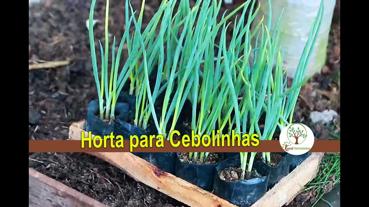 Horta em casa como plantar cebolinha plantar em casa youtube for Como plantar patatas en casa