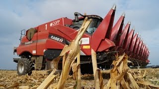 Akcja kukurydza 2015: kombajny Case IH Axial-Flow 8230 drugi sezon w kukurydzy