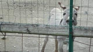 Crazy Evil Ultra Brutal Donkey - Seven Hills Camping Rome