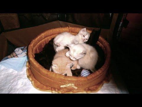 Бездомные котята.Трое без мамы.