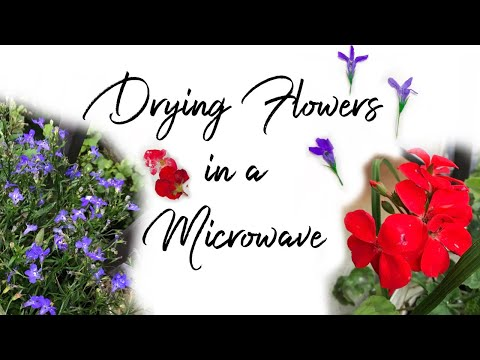 Does It Work? Pressing Flowers in a Microwave