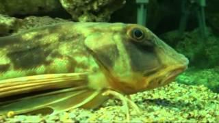 Что можно посмотреть в океанариуме