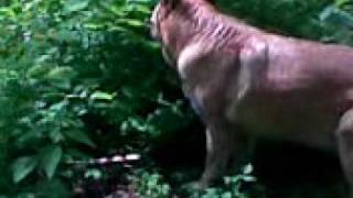 roślinożerny pies