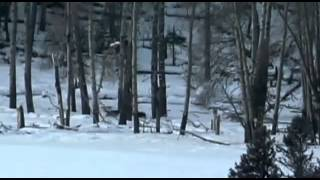 BBC Documentary-Wolf Battlefield