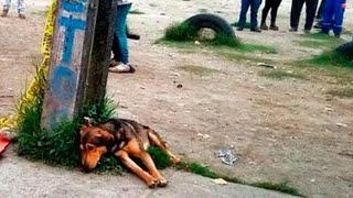 Несчастная собака погибала от голода. Но то, что было у нее под животом, заставляло ее жить!