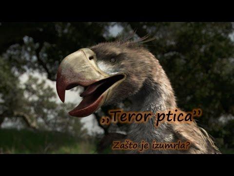 TEROR PTICA - zašto je izumrla?