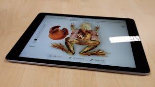 6th-Gen iPad (2018) Unboxing + Hands On