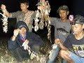 Wow Trik Berburu Menangkap Burung Malam Hari Dapat Ratusan  Mp3 - Mp4 Download