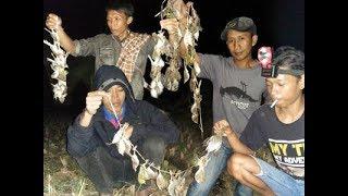 Download Video WOW TRIK berburu/menangkap burung malam hari dapat raTusan MP3 3GP MP4