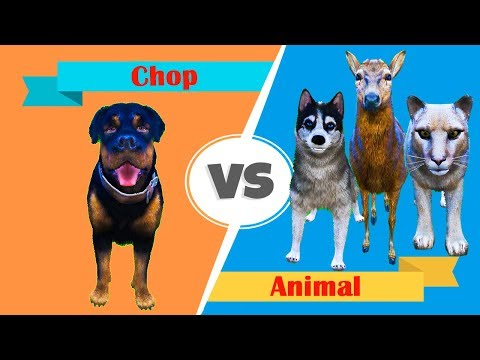 GTA 5 - Chop Vs Animal thumbnail