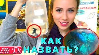 Рыба клоун в аквариуме фото и видео