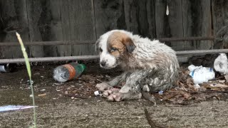 Abandoned puppy in terrible condition crying for help.