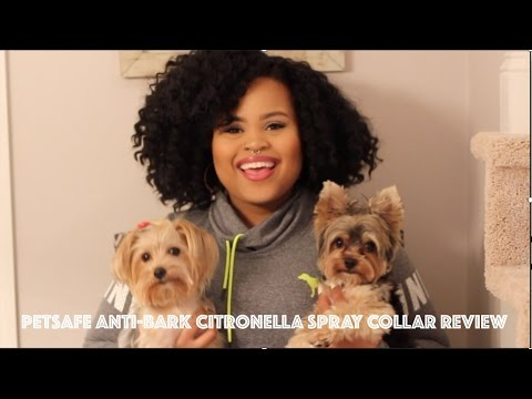 PETSAFE ANTIBARK CITRONELLA SPRAY COLLAR REVIEW