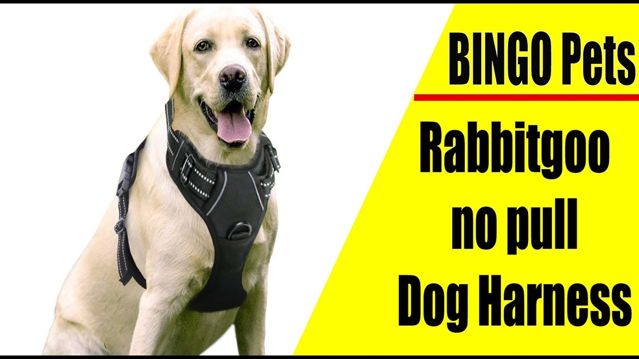 Rabbitgoo No Pull Dog Harness Review 2019 Ll Best New Dog