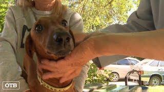 Полиция Екатеринбурга разыскивает злоумышленников, которые выбросили пса с пятого этажа