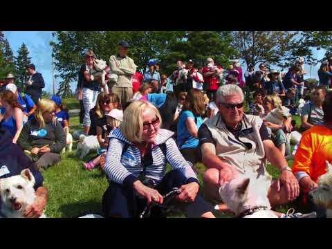 2017 Toronto Westie Walk  Rescue and Fun Day
