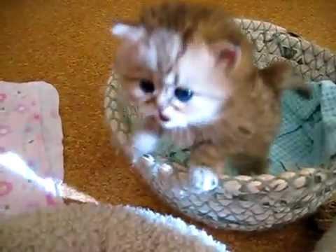 Anak Kucing Yang Sangat Comel Youtube