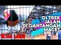 Penyebab Burung Macet Di Lapangan Bedah Kasus  Mp3 - Mp4 Download