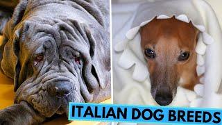TOP 20 Italian Dog Breed List