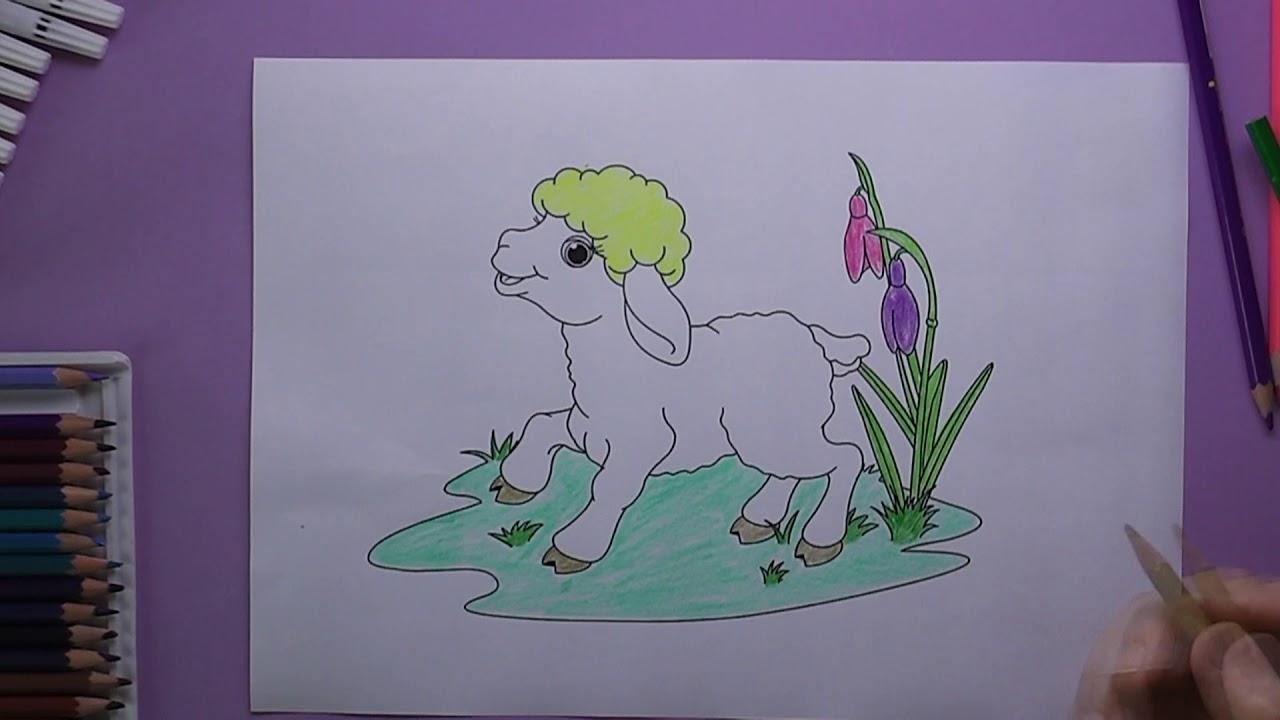 Sevimli Kuzu Boyama Sevimli Kuzu Nasil Boyanir Coloring Pretty