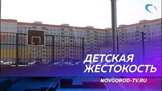Видео жестокого обращения новгородских школьниц с котенком шокировало пользователей сети