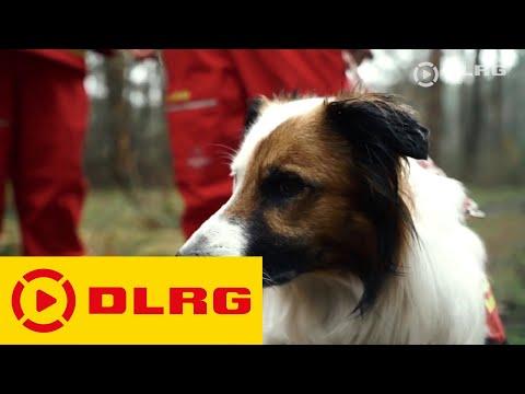 Die DLRG Rettungshundestaffel Stormarn im Einsatz
