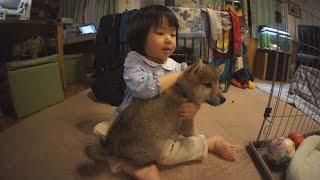 柴犬タロウと家族の日記。 どちらも緊張しています。