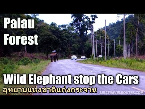 Wild Elephant stop the Cars on the way to Palau Waterfall, Kaeng Krachan National Park