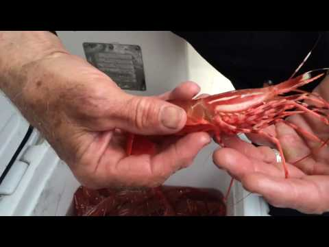 How to clean spot prawns
