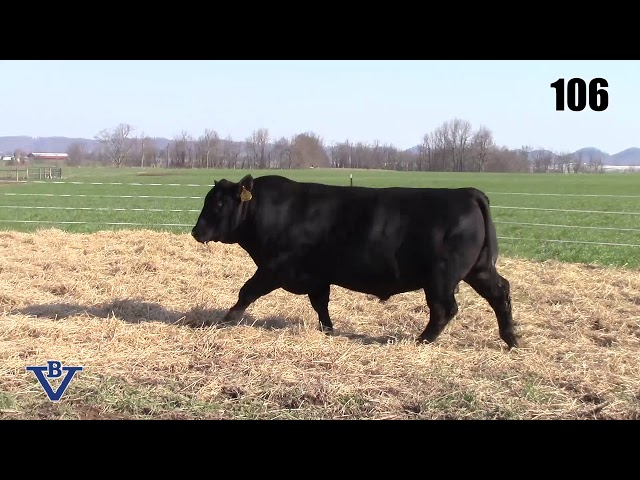 Branch View Angus Lot 106