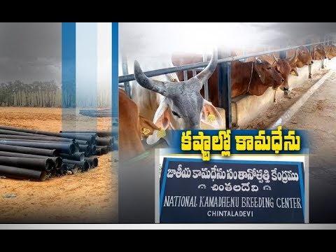 Chinthaladeevi Cattle Breeding Center-Telugu Agricultural News Mar 2020