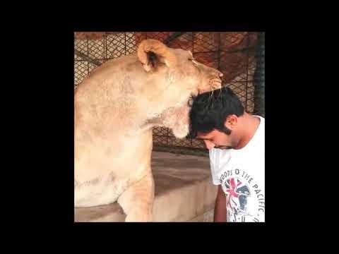 Dubai Prince with his Pet Lion   Prince Pets