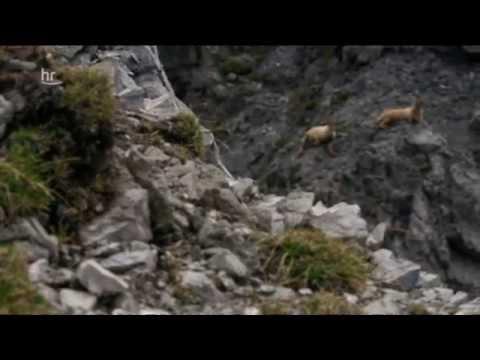 Berg und Bergler - Der Ortler