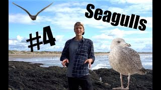 Are Gulls The Most Annoying Animal in The UK? (ft Tom Auld)