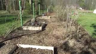 Мульчирование и как использовать картон в огороде