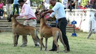 Bangalore Canine Club Dog Show Nov 2009