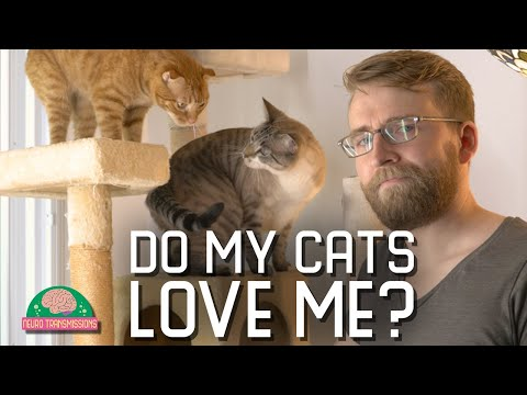 I test my cat's love