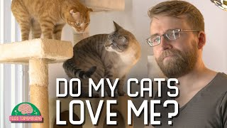I test my cat's love