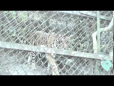 zoo - Itanagar