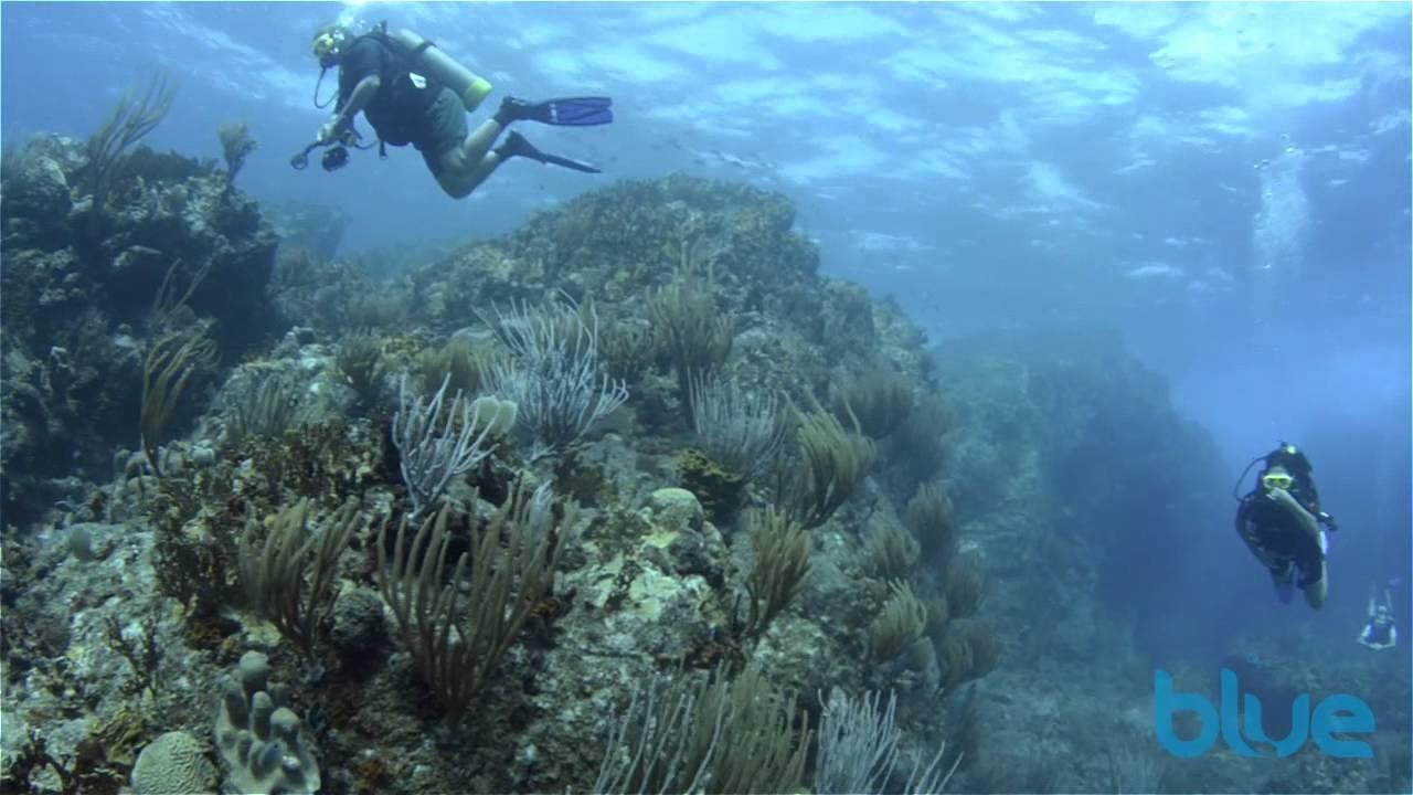 Diving British Virgin Islands