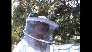 Beekeeping: FLOW HIVE vs Traditional Hive.