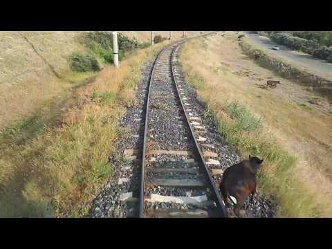 У машинистов грузовых поездов случаи бывают разные