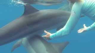 Swimming with wild dolphins in Hawaii