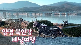 여행하는 뱅갈고양이, 양평 카페에서 북한강을 바라보며 …