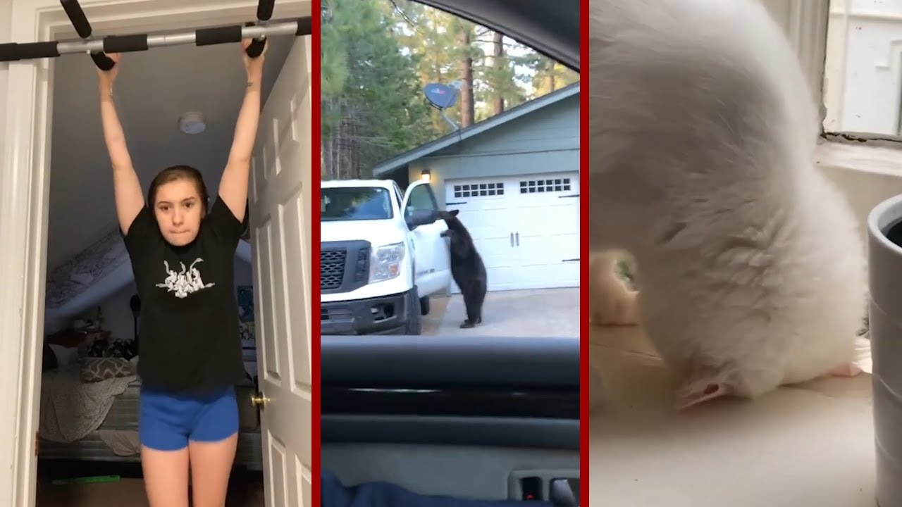 Top Viral Videos Of The Week - The Ultimate Viral Videos Of November
