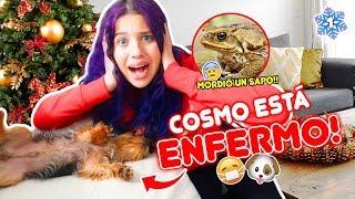 COSMO ESTÁ ENFERMO!! 😰 MORDIÓ UN SAPO!! VLOGMAS 1🎄 02 Dic 2019 | Leyla Star 💫