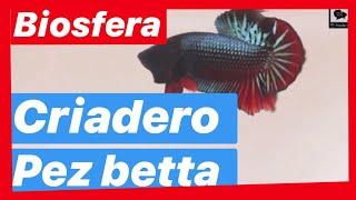 VISITA DESDE DENTRO Acuario Biosfera A 10 Minutos Del MERCADO MIXHUCA